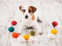 Påskefrokost for hunde i Helsingør